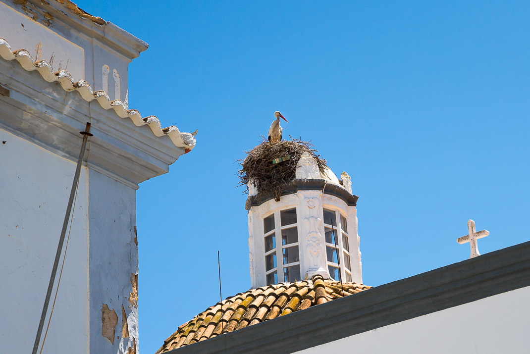 Stork nest atop church