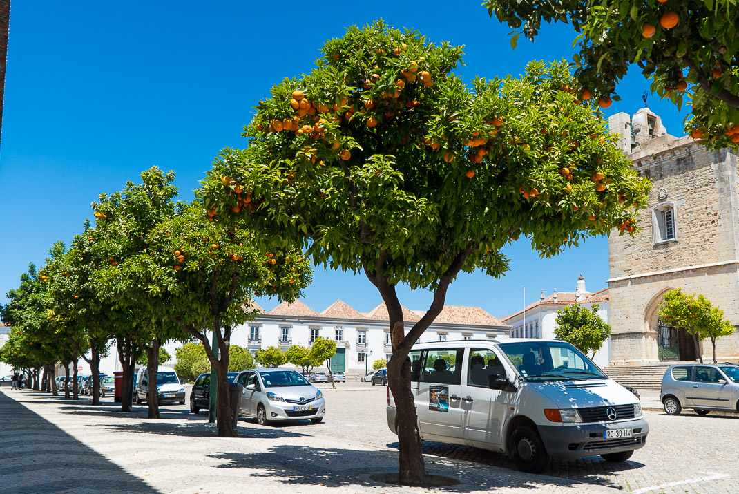 Orange trees outside Cathedral