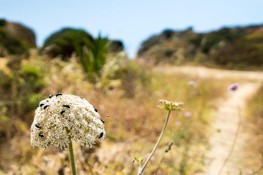 Lagos Flower Bugs Path
