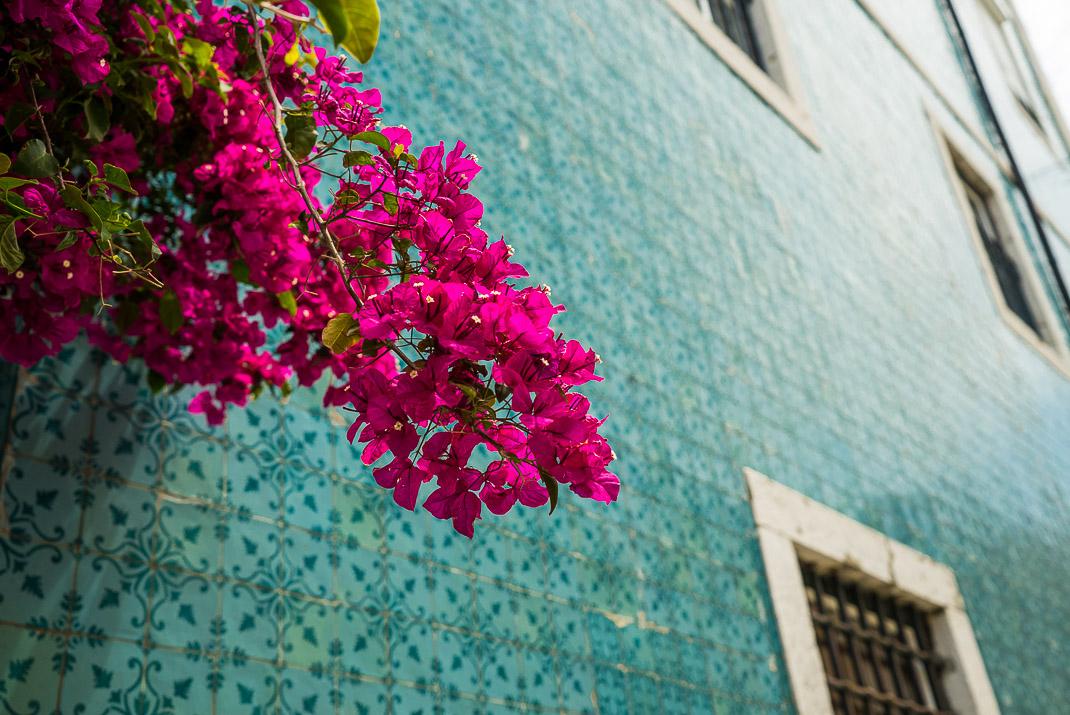 Lisbon Colorful Flowers on Tile