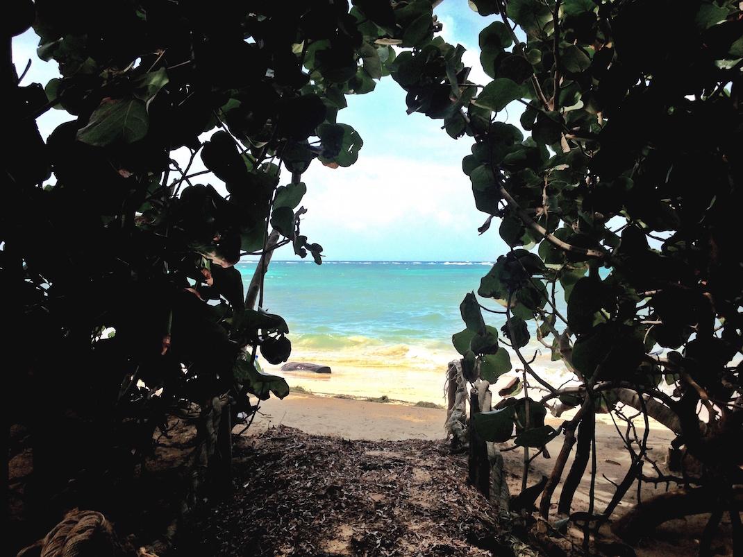 Little Corn Mangrove Beach