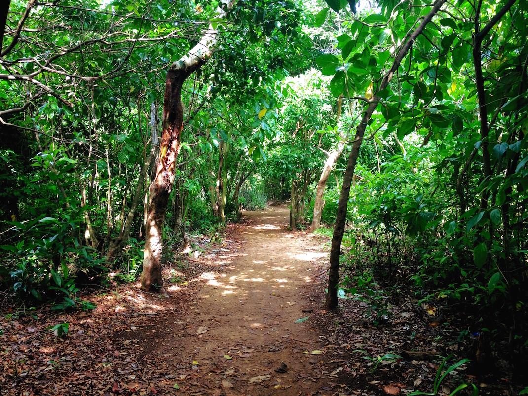 Little Corn Jungle Path