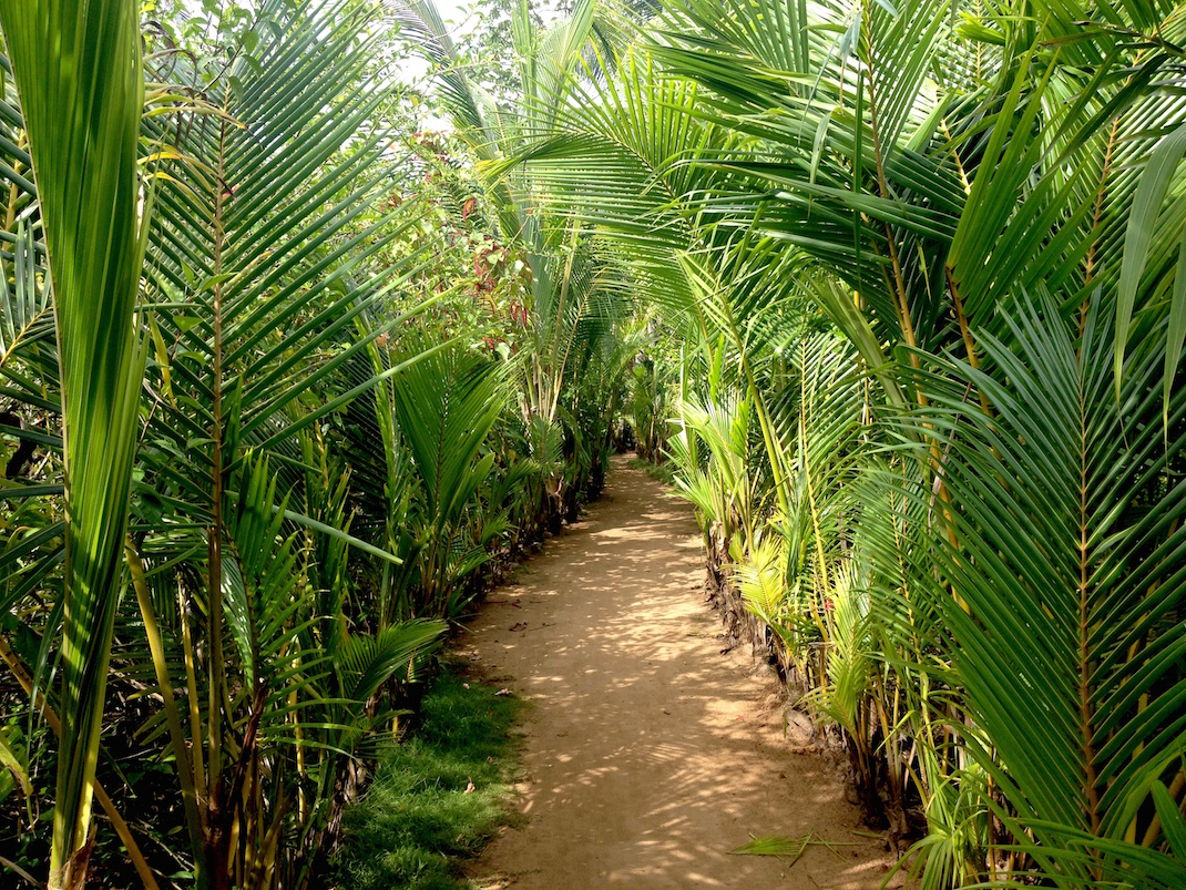Little Corn Palm Path