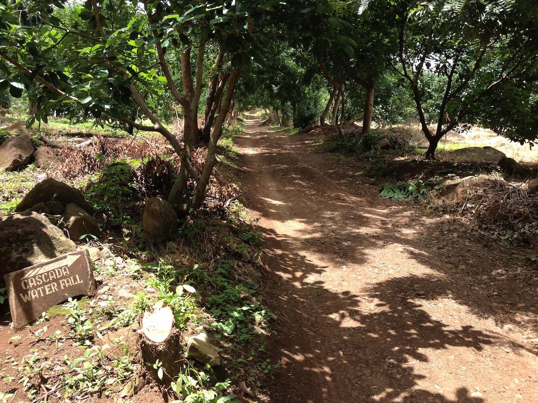 Ometepe Waterfall Dirt Path
