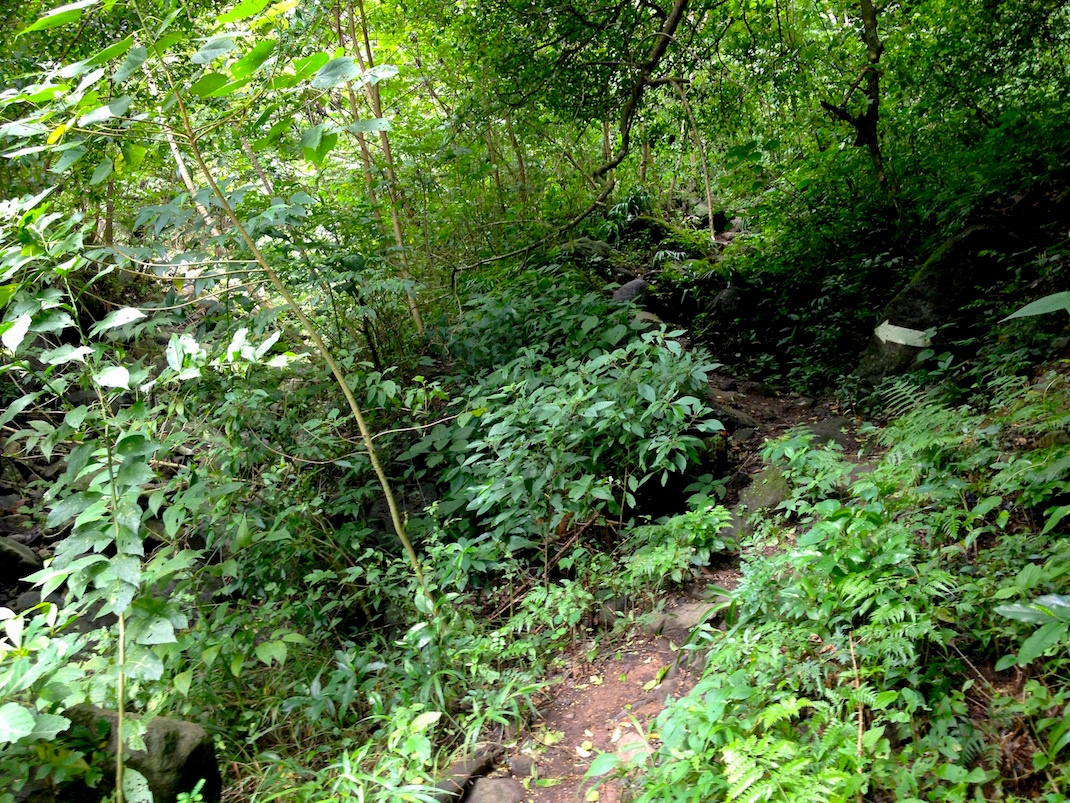 Ometepe Waterfall Overgrown Path