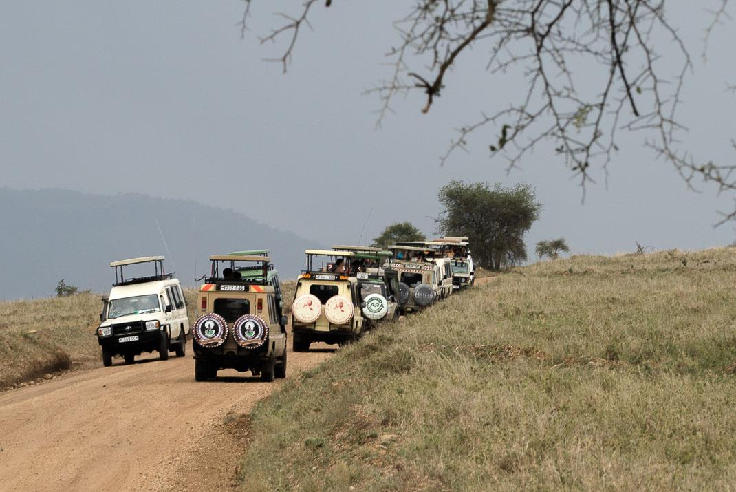 Central Serengeti Safari Tours