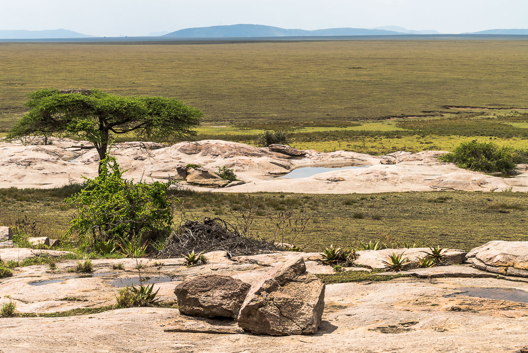 Serengeti Planes Open Space