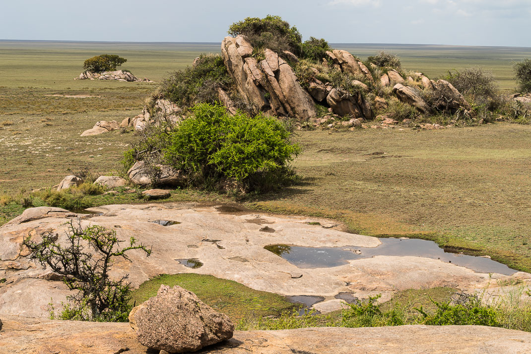 Serengeti Plains Rock Outcroppings