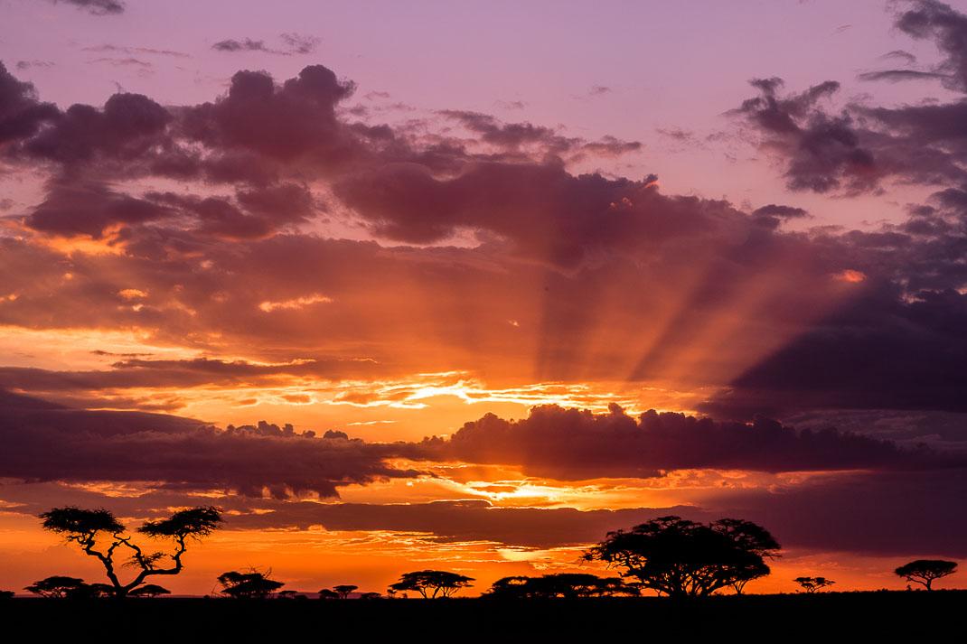 Serengeti Plains Sunset