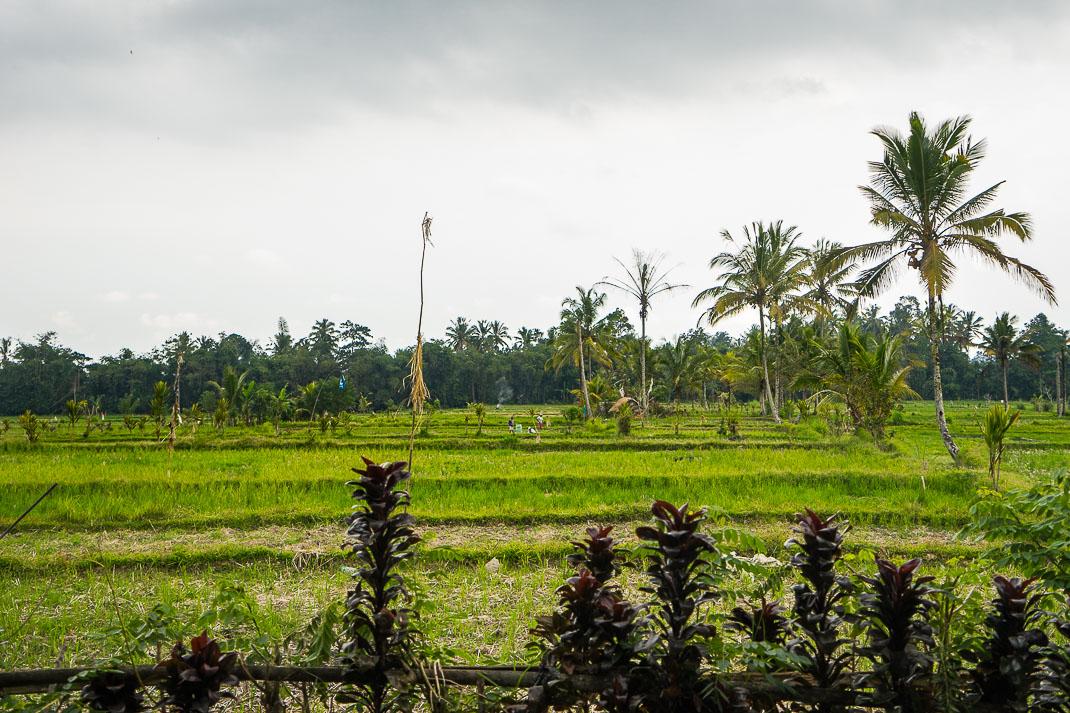 Kofi Luwak Farm View