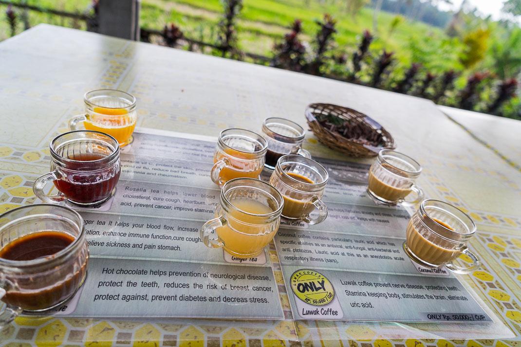 Kopi Luwak Tea Tasting