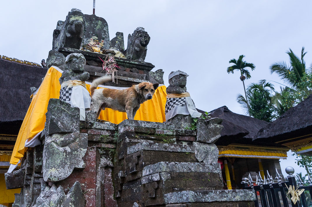 Balinese Temples Dog on Throne