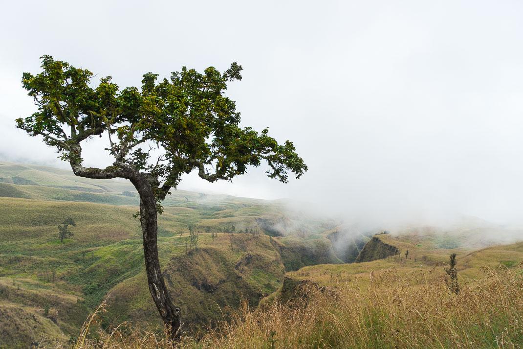 Climbing Mount Rinjani Tree Gorge