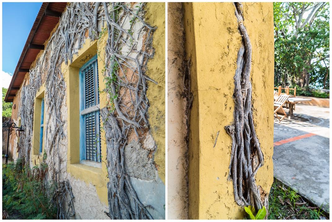 Stone Town Prison Island Vines
