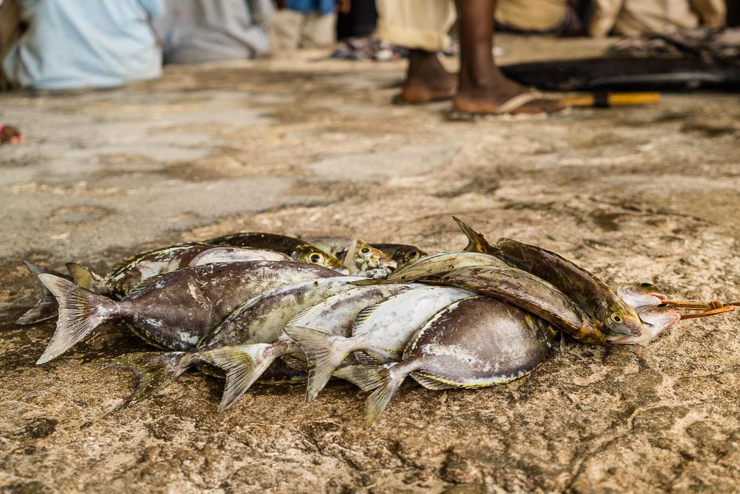 Zanzibar Matemwe fish market