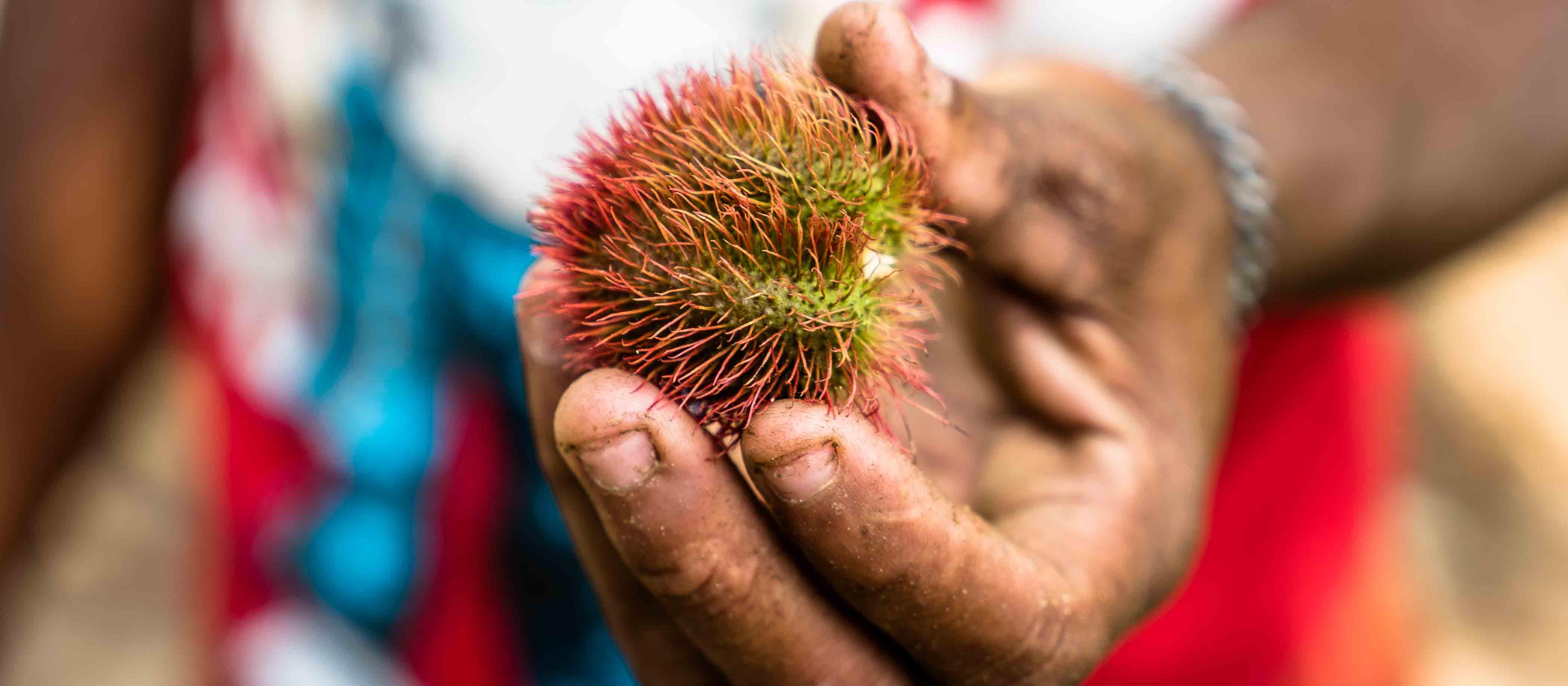 Zanzibar-Spice-Farm-Featured