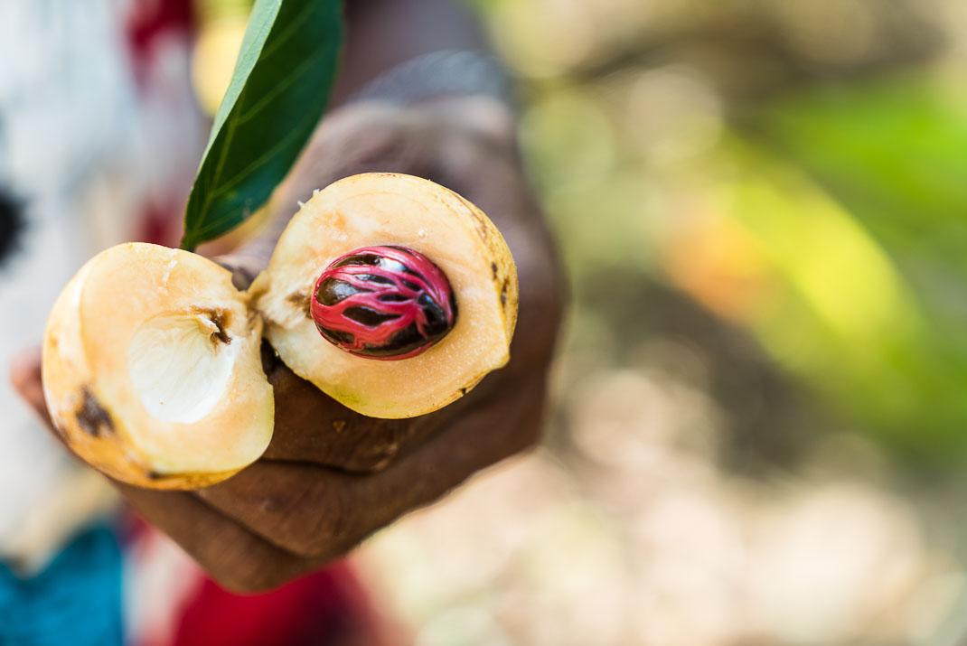 Zanzibar Spice Farm nutmeg