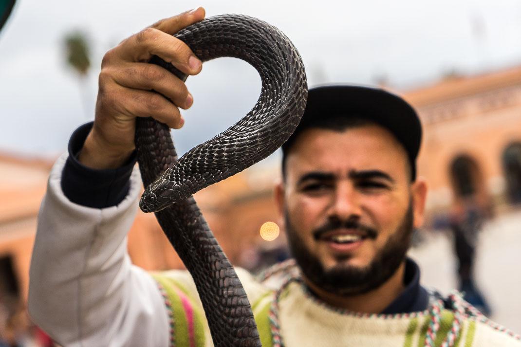 Marrakech Snake Charmer Cobra