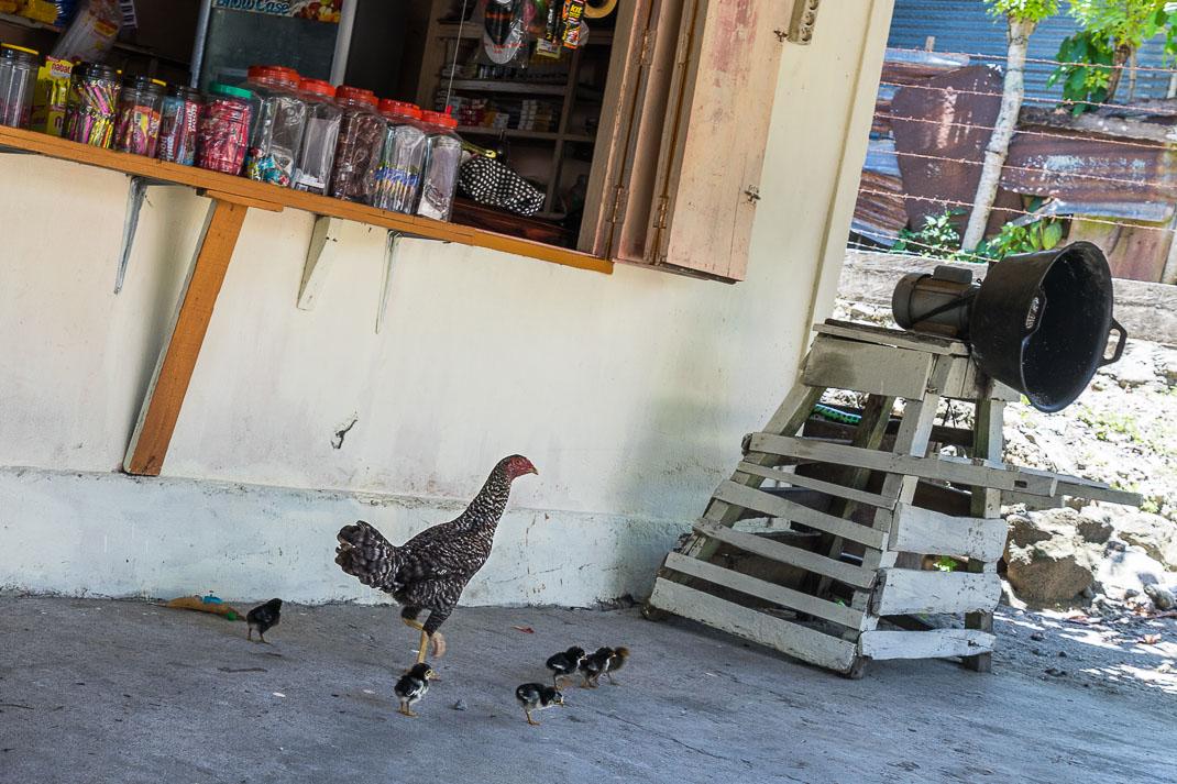 Sabang Entrance Shop Chickens