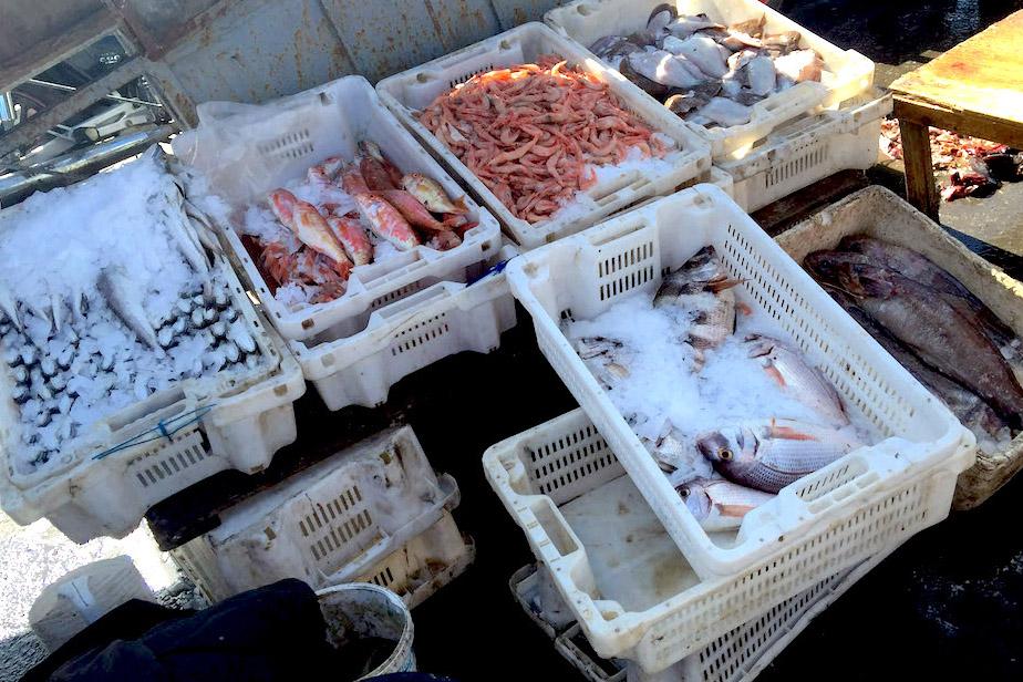 Safi Fish Market Ice