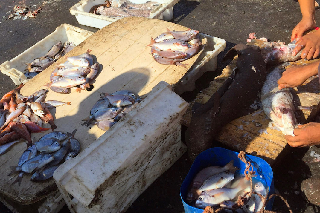 Safi Fish Market Display