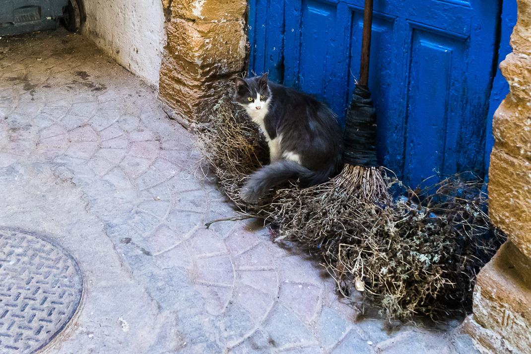 Safi Medina Cat Broom