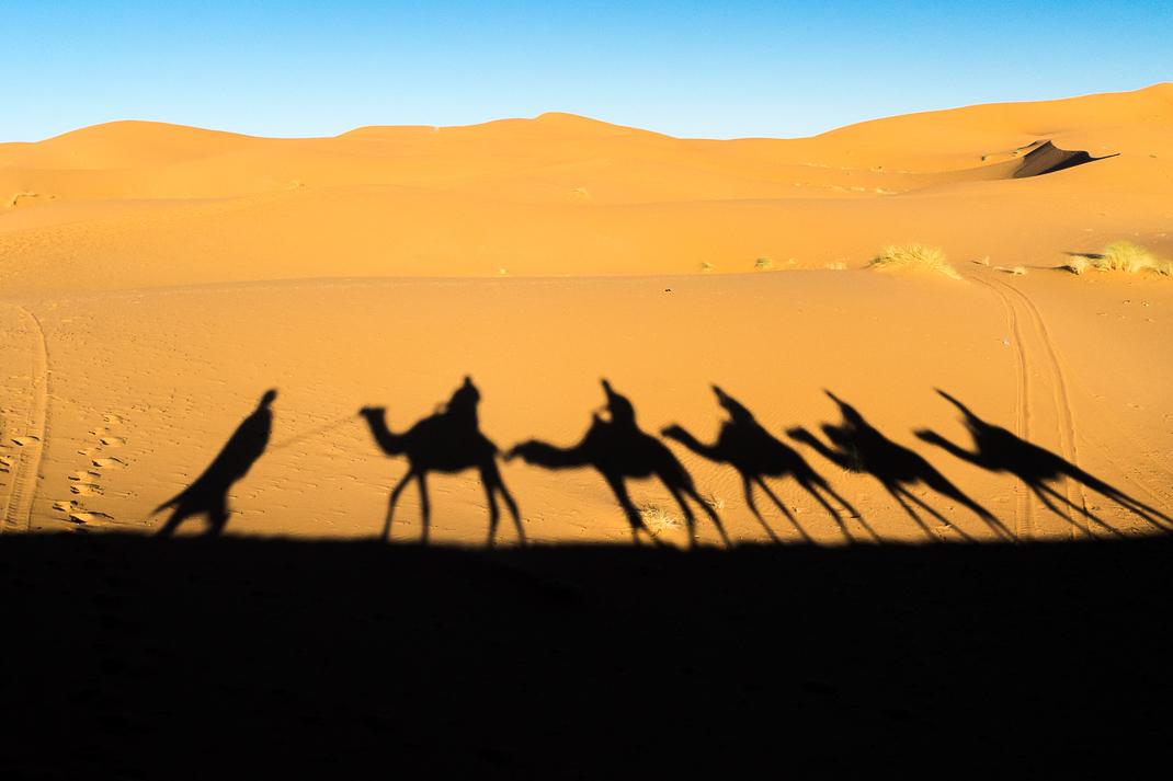 Sahara Desert Tour Shadow Camels